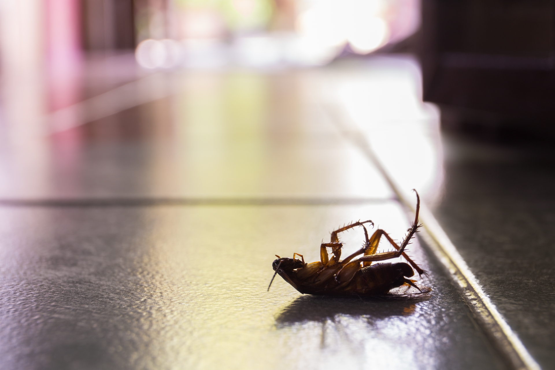 Cockroach Control, Pest Control in Deptford, SE8. Call Now 020 8166 9746